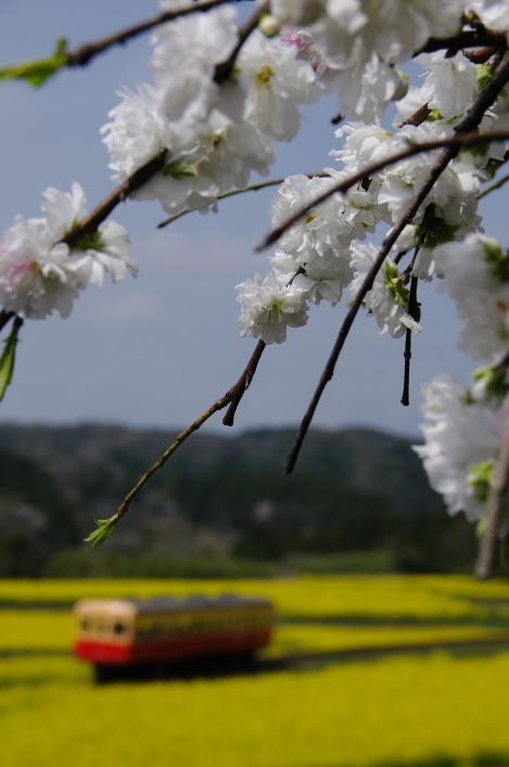 2013年04月01日 小湊鉄道 031