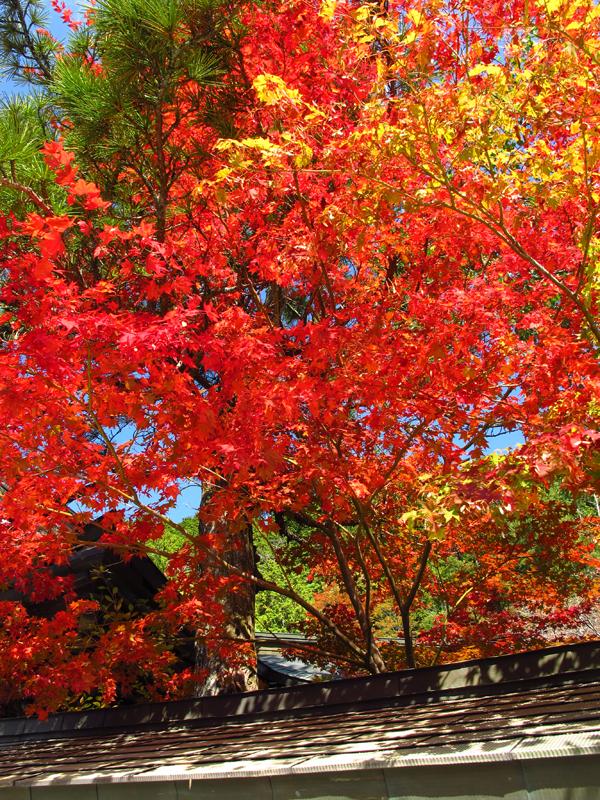 高野山紅葉1