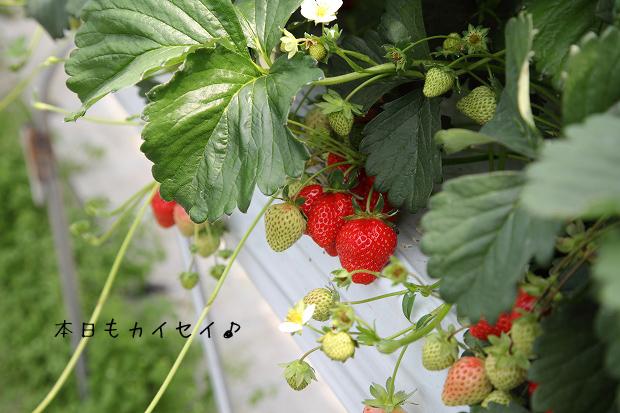 z-IMG_1195.jpg