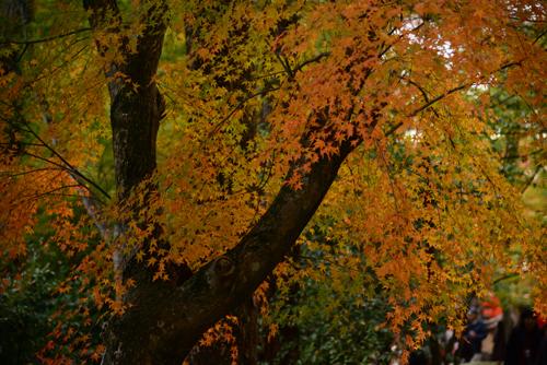 2012.11.京都 600_6996