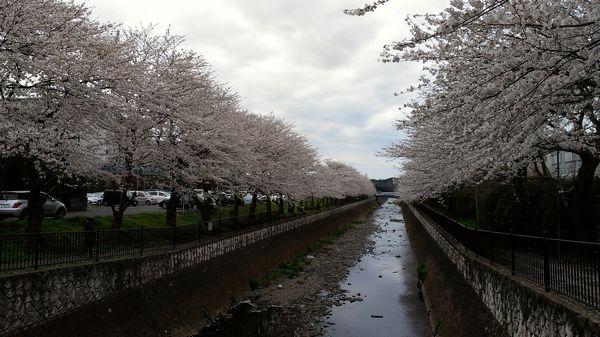 udagawaIMAG0146.jpg