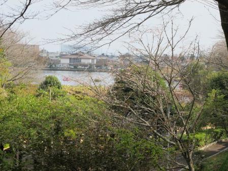蓮華寺池公園 冬桜