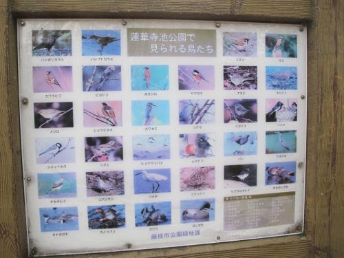 蓮華寺池公園で見られる野鳥