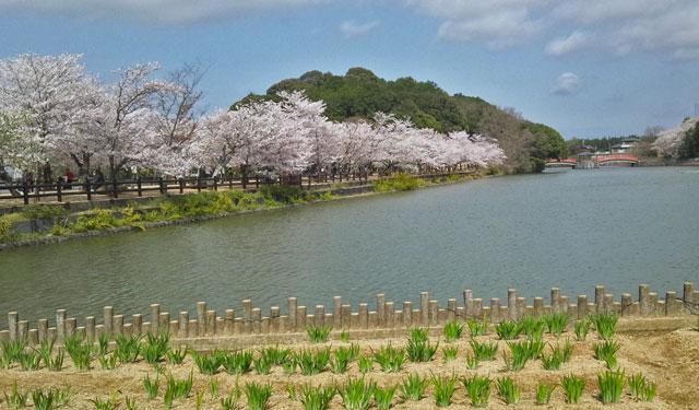 鶴亀公園6