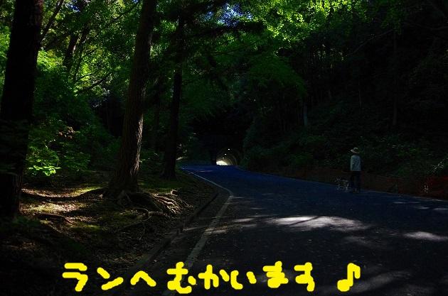 IMGP6066.jpg