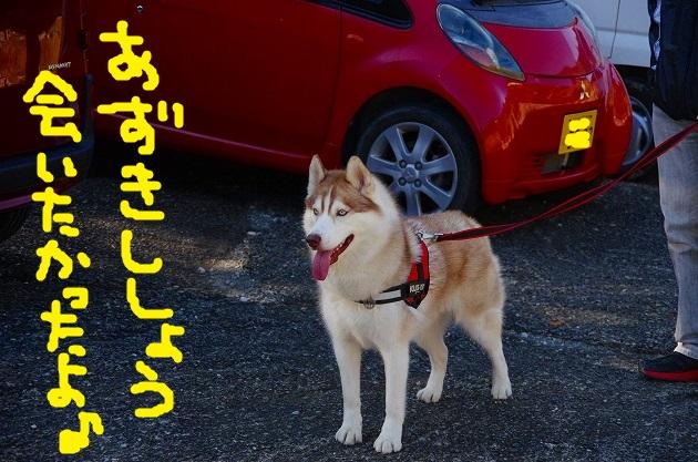 IMGP6366.jpg