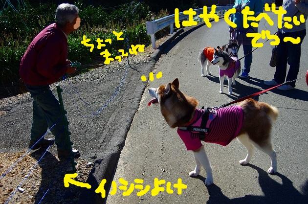 IMGP6380.jpg