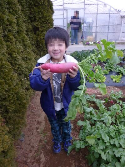イチゴ狩り3