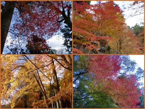 2012-11-18.jpg