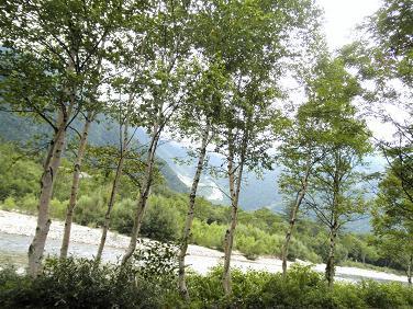 白樺と穂高連峰