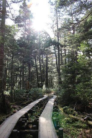 林間コース