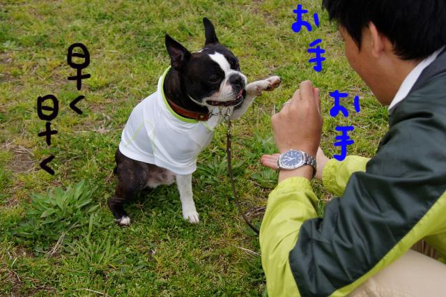 関ボス2012.04.15 487 (640x426)
