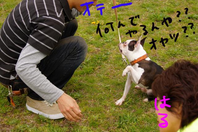 関ボス2012.04.15 517 (640x426)