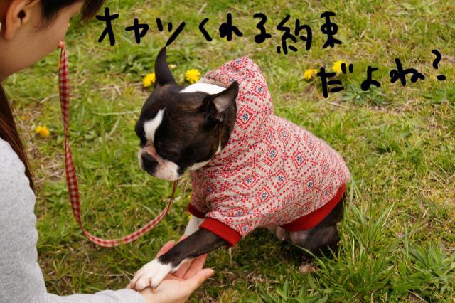 関ボス2012.04.15 522 (640x426)