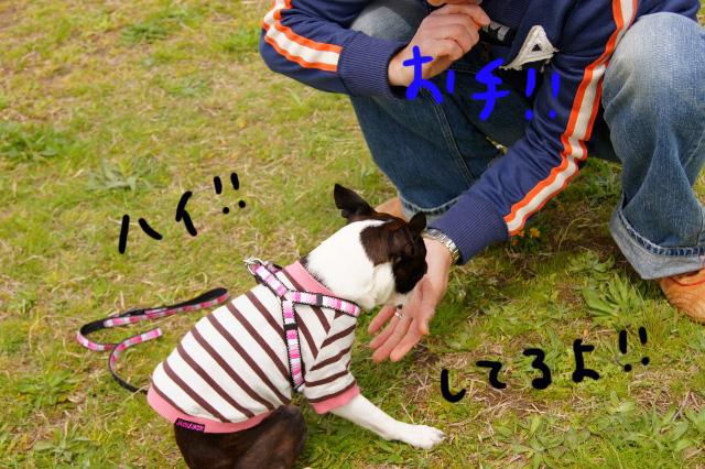 関ボス2012.04.15 531 (640x426)