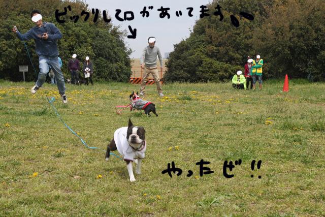 関ボス2012.04.15 023 (640x427)
