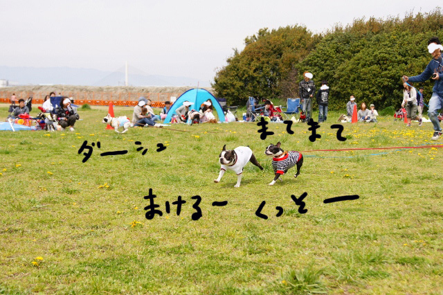 関ボス2012.04.15 564 (640x426)