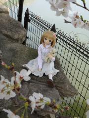 桜201304-01
