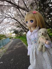 桜201304-02
