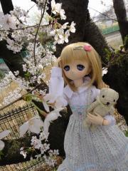 桜201304-03