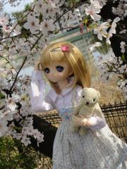 桜201304-04