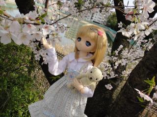 桜201304-05