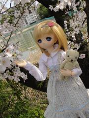 桜201304-06