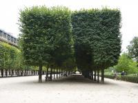 パレロワイヤル庭園1