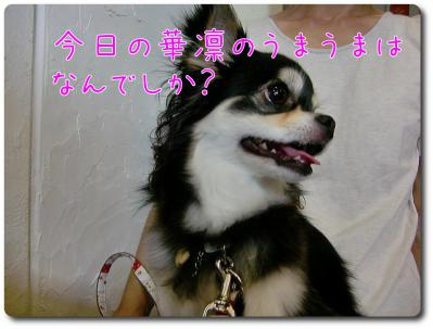 CIMG0109_convert_20120924214628.jpg