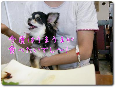 CIMG0179_convert_20120924214724.jpg