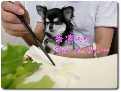 CIMG0190_convert_20120924214744.jpg