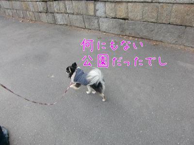 CIMG6254_convert_20120301174518.jpg