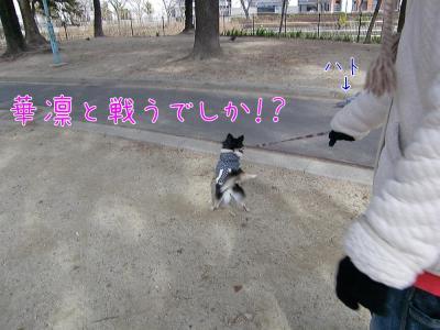 CIMG6268_convert_20120301174540.jpg