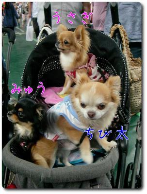 CIMG7972_convert_20120601222809.jpg