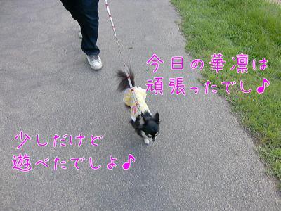 CIMG8861_convert_20120723191923.jpg