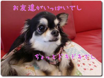 CIMG9089_convert_20120821215023.jpg