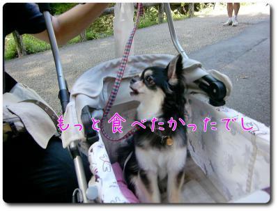 CIMG9635_convert_20120904223544.jpg