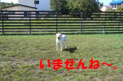 P1020660_convert_20110923215241.jpg