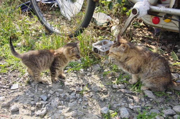 子猫たち3