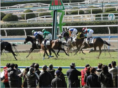 競馬画像2