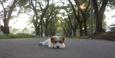 H230812子犬2