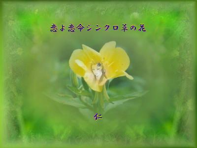 フォト575『 恋よ恋命シンクロ草の花 』