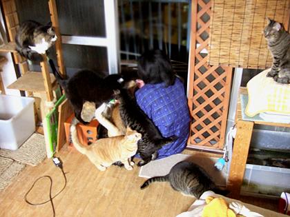 右左端に狛犬の様に座っているのは、なづなとモフリン