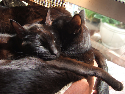 バジルの素敵な寝顔(`m´〃)