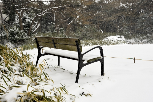 大雪の予報は当たりましたね。普段見る景色と膳違うように見えます。