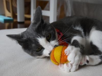 これはかぼちゃ?