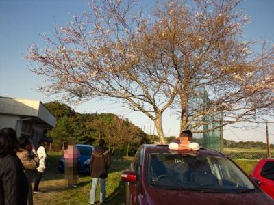 体育館前の桜