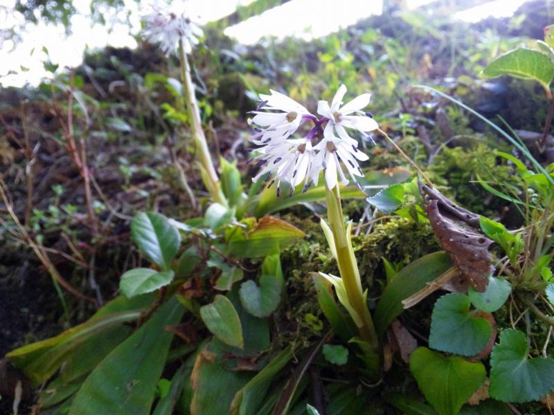 130328_144638白い花