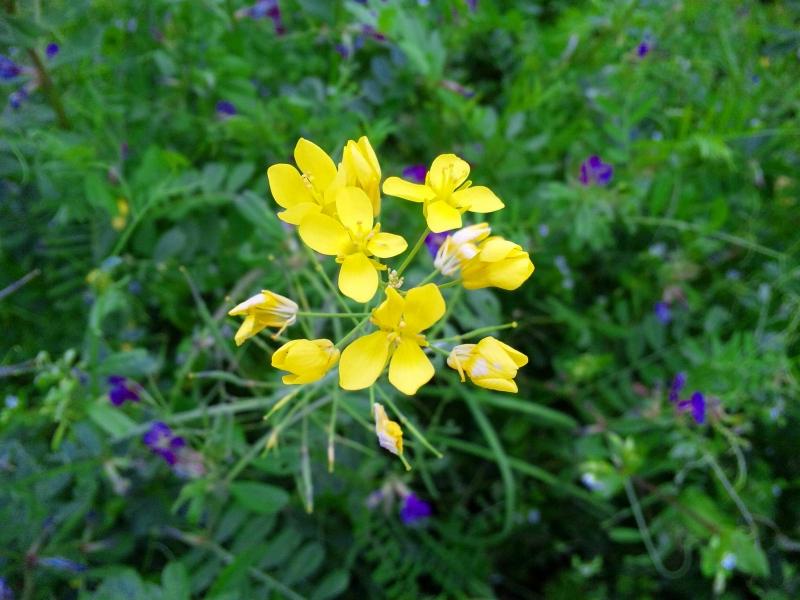 130328_164531葉の花
