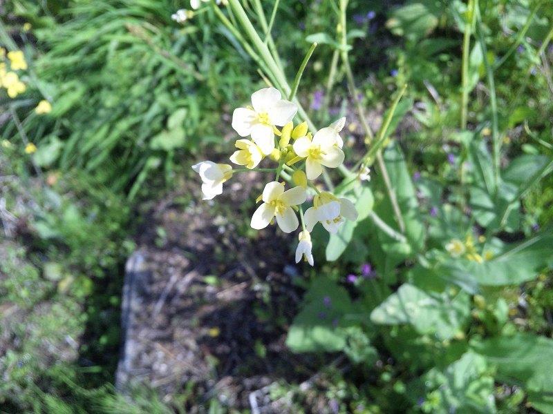 130408_100419花のアップ